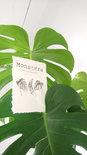 Op de Maalzolder - Kaarten Botanical A6 s/4