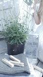 (Op) de Maalzolder - Linnenwater Soft freshness