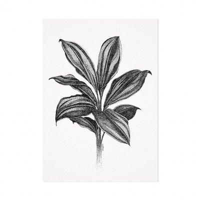 Mélisse - Kaart De cordyline