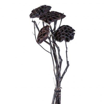 PTMD - Droogbloemen zwart
