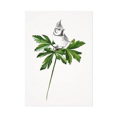 Mélisse - Kaart De kuifmees op blad
