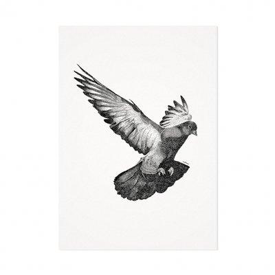 Mélisse - Kaart De duif