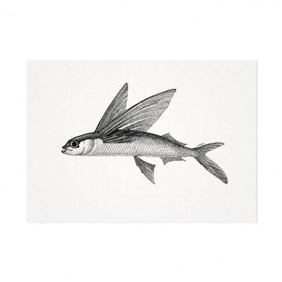 Mélisse - Kaart De Atlantische vliegende vis
