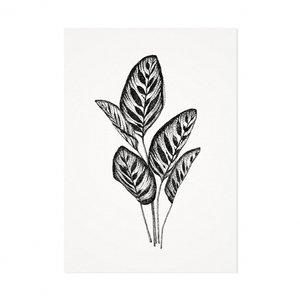 distelroos-Melisse-Kaart-De-pauwenplant